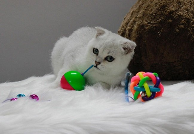 AZ PET là Top 10 Shop bán phụ kiện cho thú cưng uy tín ở TPHCM