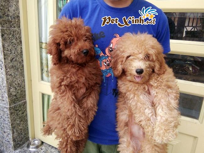 PET Xinh là Top 10 Shop bán phụ kiện cho thú cưng uy tín ở TPHCM
